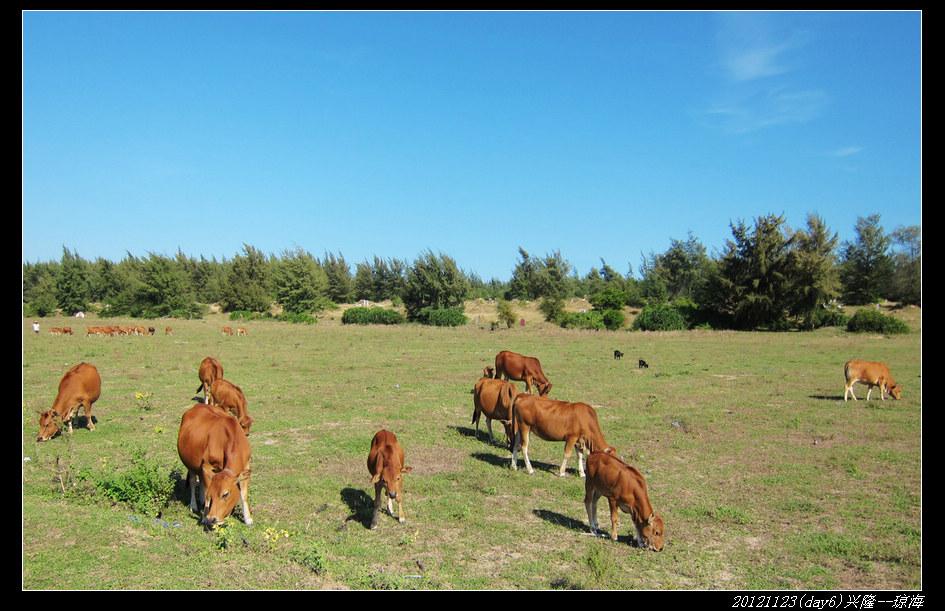 20121123环骑海南day6(兴隆 琼海)28 - 20121123环骑海南day6(兴隆--琼海)